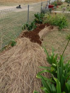 I put down a whole thickness of Coolatai grass to stop the grass growing.