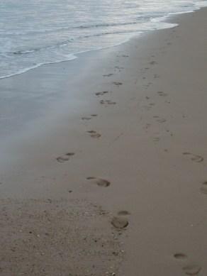 Footprints at dawn