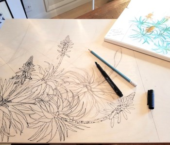 Drawing Aloe arborescens on wood. Fiona Parrott printmaker. Fiona Parrot prints.