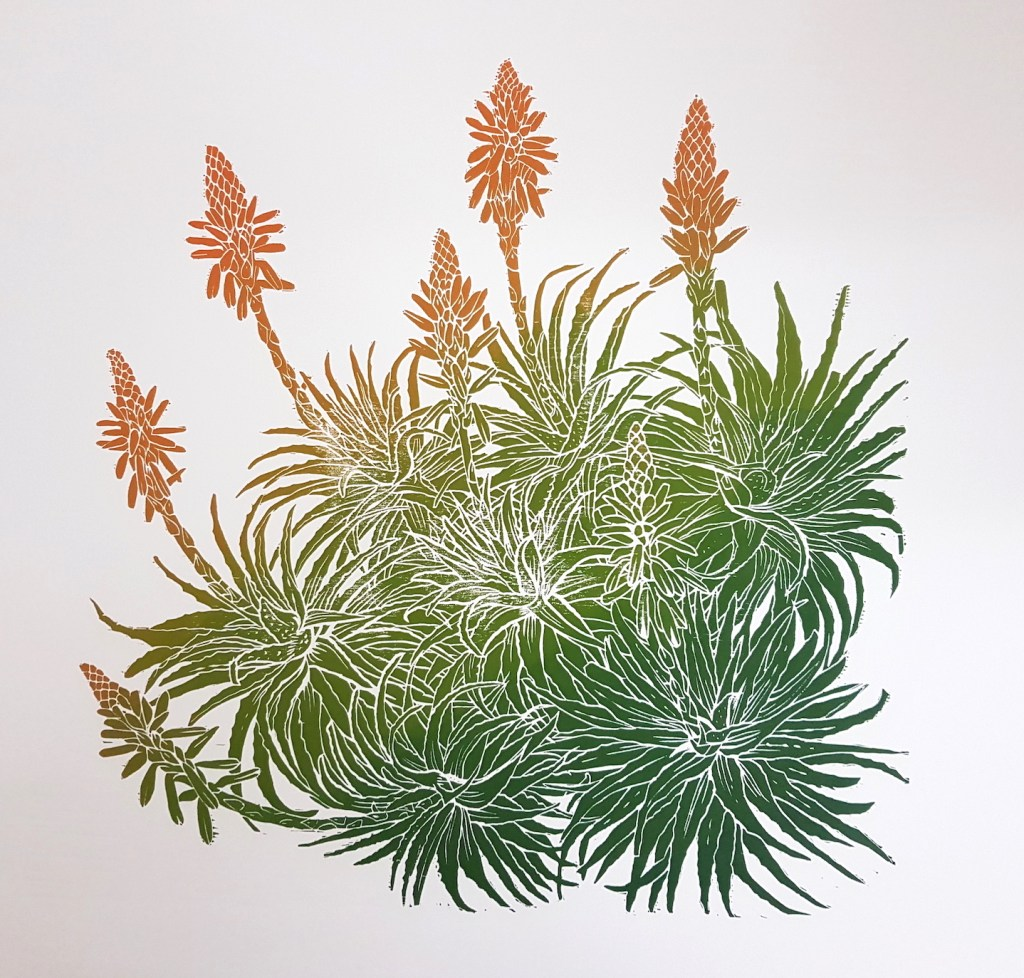 Flowering Aloe arborescens. Woodcut print by Fiona Parrott printmaker. Fiona Parrot prints. Also known as the Torch Aloe and the Candelabra Aloe.