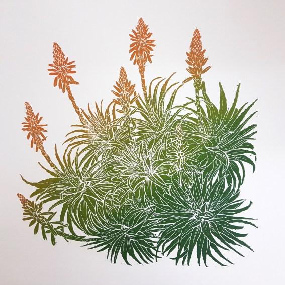 Flowering Aloe arborescens. Woodcut print by Fiona Parrott printmaker.