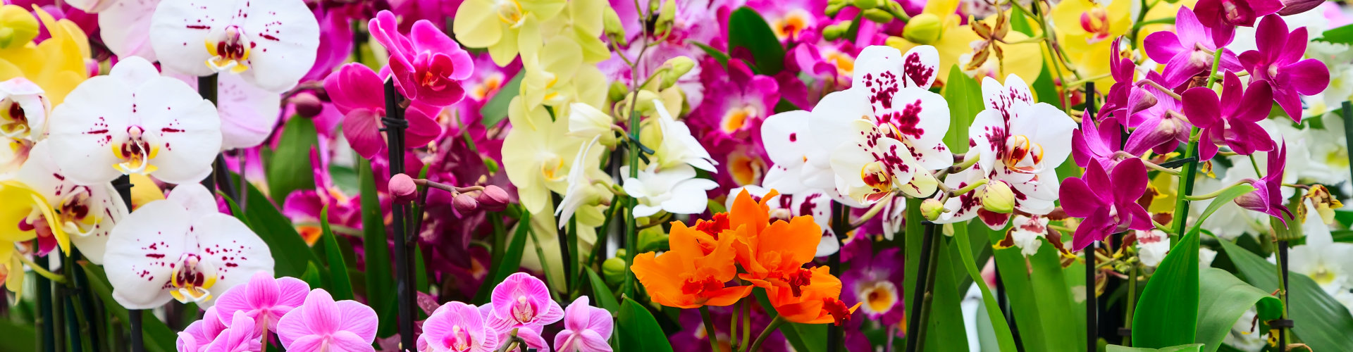 variety of orchids