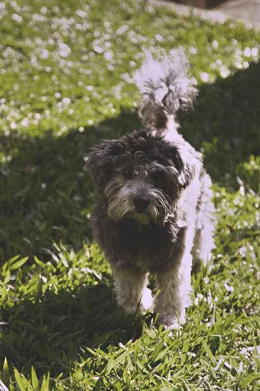 A melhor luz para fotografar cães