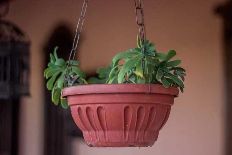 Plantas e suculentas