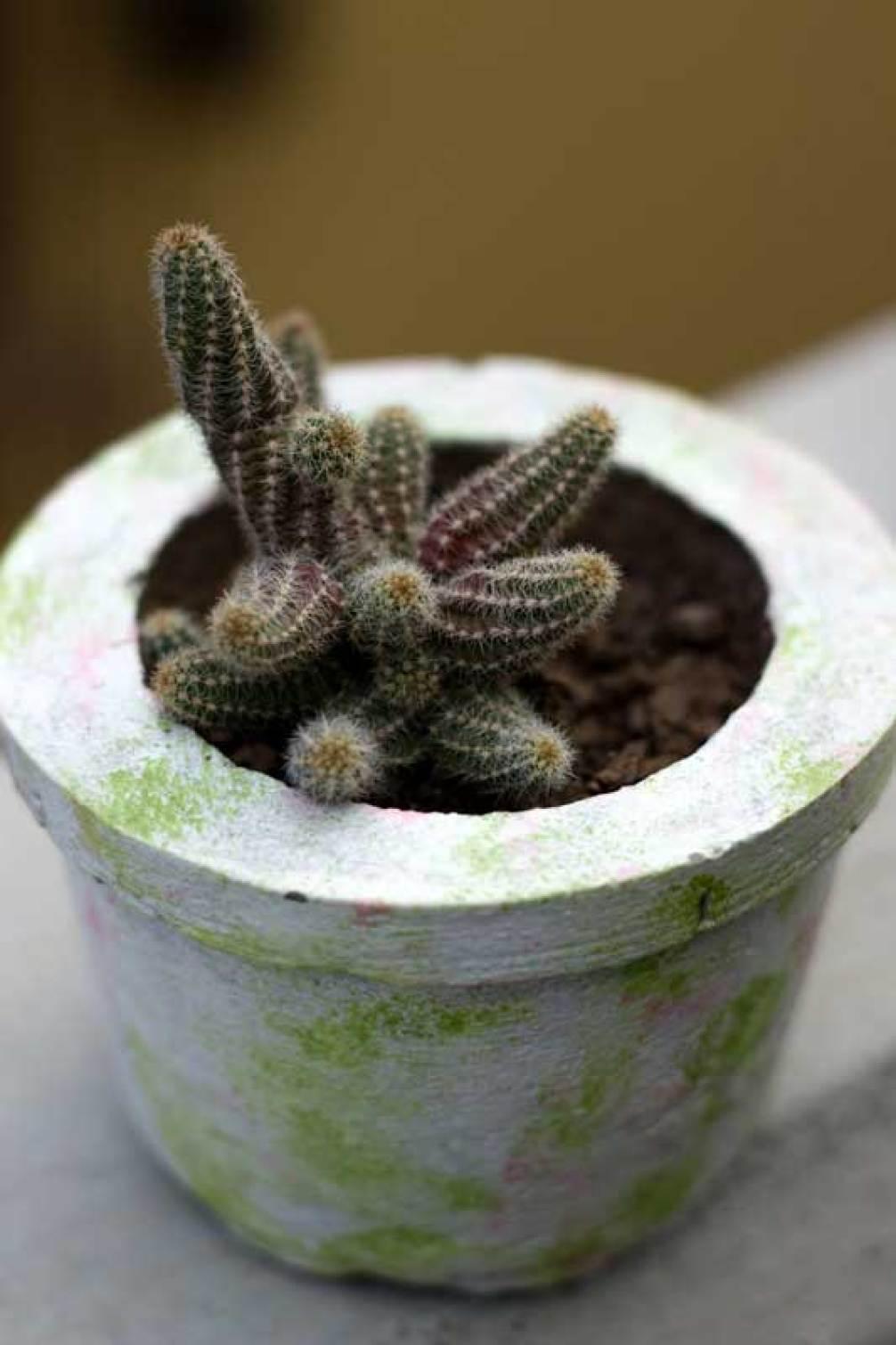Flores nos cactus
