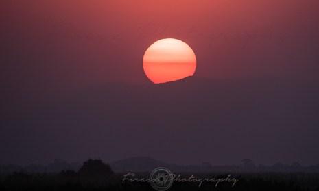 Jambo Sunset