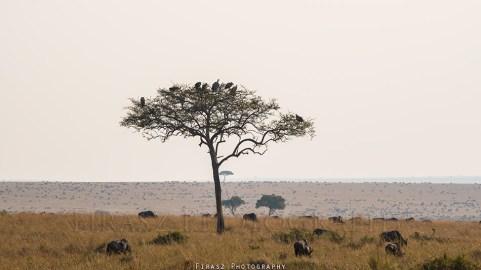 Trees of Mara1