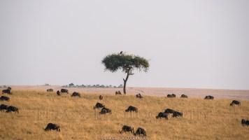 Trees of Mara4