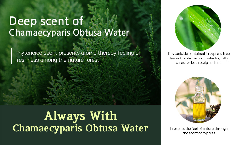 Phytonicide Cypress Tree Antibiotic Material Gently Cares Both Scalp Hair Feel of Nature Scent