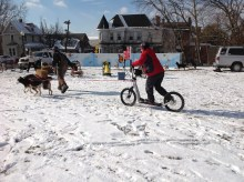 fi-2013-jersey-sands-dog-sleds-2