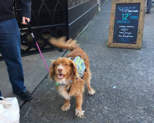 It's a Dog's Life In the Pacific Northwest – dog friendly travel ideas