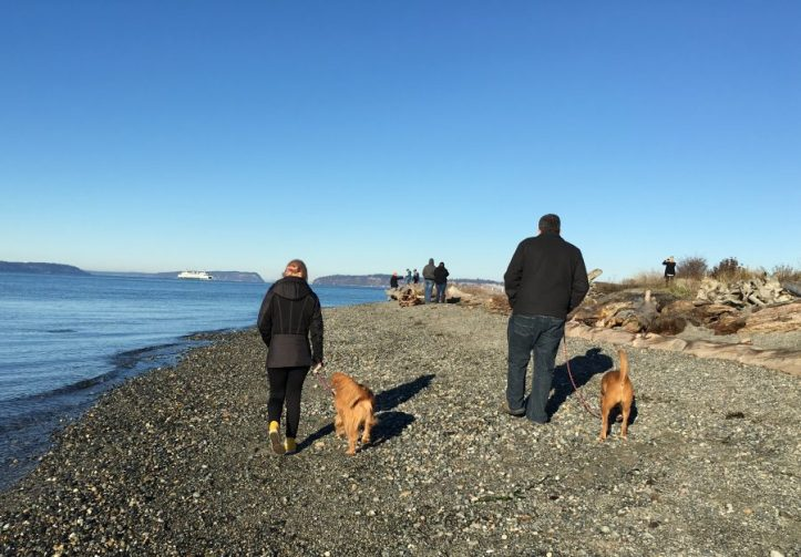 Exploring the many Washington Beaches with our dogs