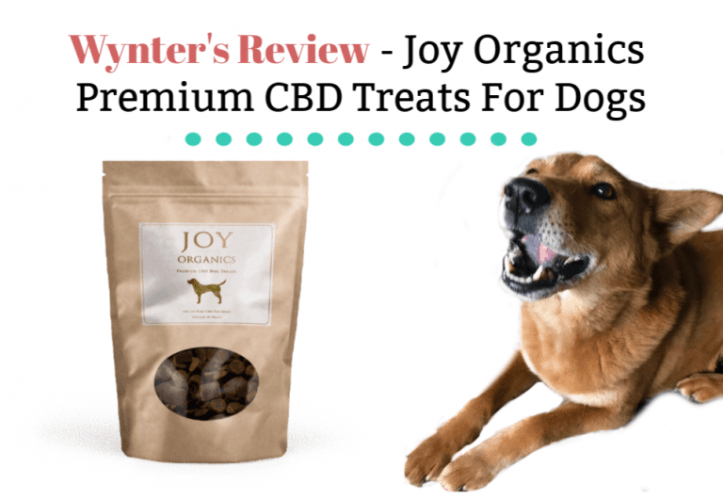 CBD oil dog treat review