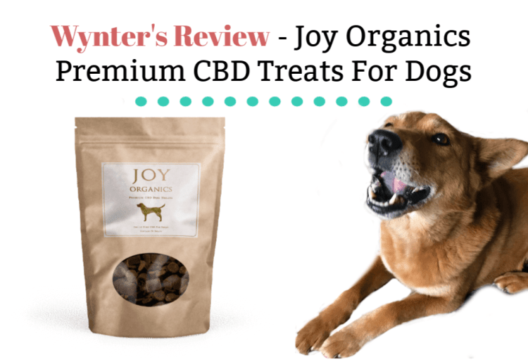 CBD dog treat review
