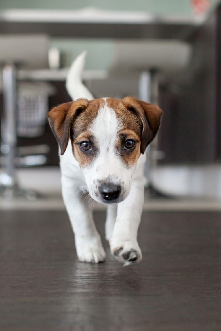How To Protect Your Hardwood Floors From Your Pet's Nails