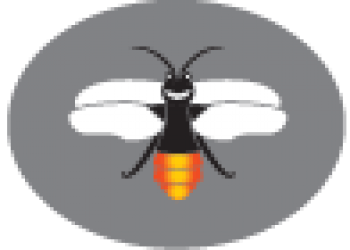 Firefly logo no text