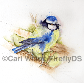 blue tit bird