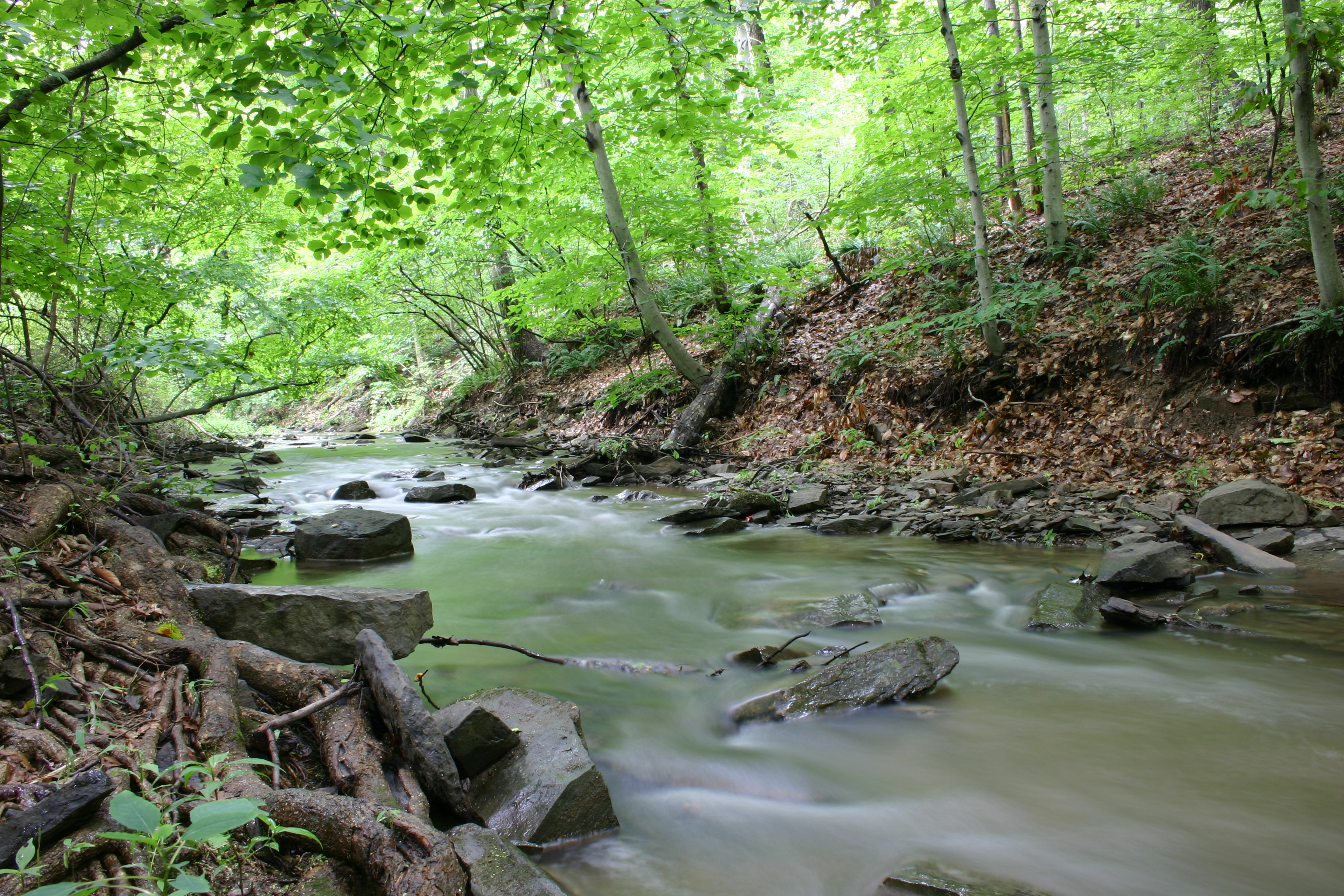 Creek in summer