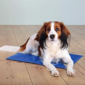 Kølemåtte til hunde, 110 x 70 cm, blå