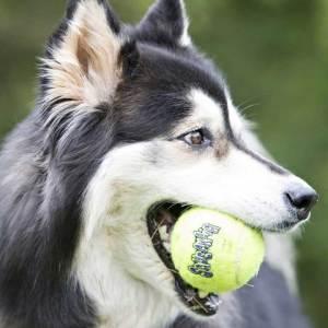 Kong AirDog tennisbolde til hundeleg - 3 stk