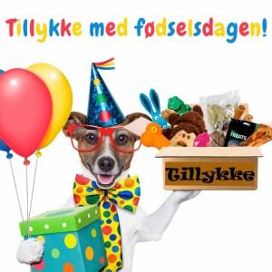 Fødselsdagsgave til hunde-Stor hund fra 21-40 kg.