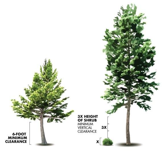 Minimum Fire Resistant Tree Vertical Clearance diagram.