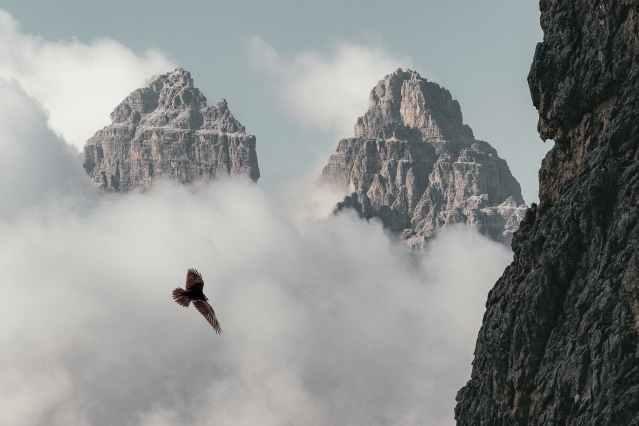 Soar high my eagle, soar high!
