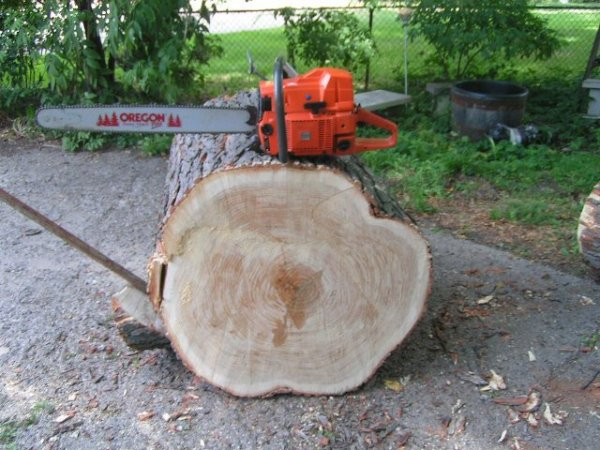 Honey Locust Wood