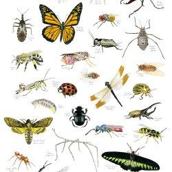 Christine Berrie Bugs print
