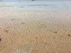Crystal clear waters of the Moray Firth
