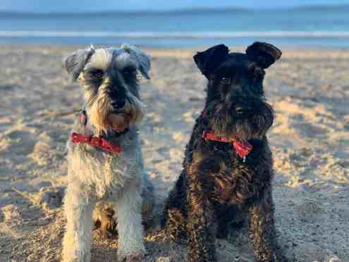 Bodie & Doyle love the beach anytime of the year (Nairn January 19)