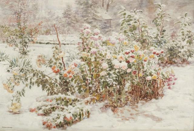 HOR1911372[2237]chrysanthèmes