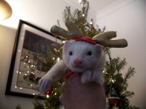 Puck.reindeer