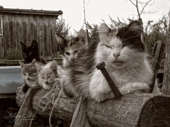 Profanitycats