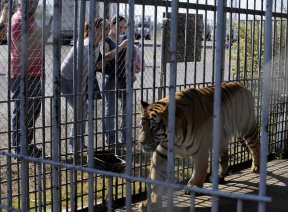 Tigertruckstop
