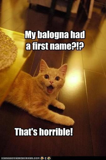Bologna cat