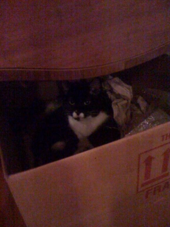 Della box