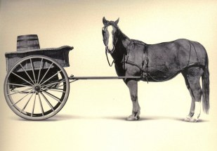 Cart_before_the_horse