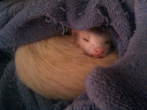 Snugglebucky