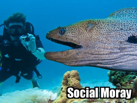 SocialMoray