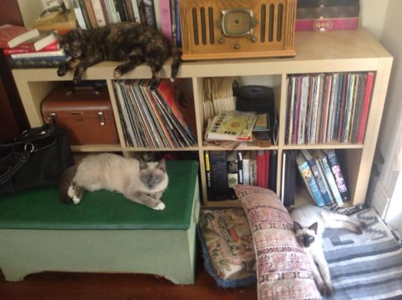 Cat Tableau