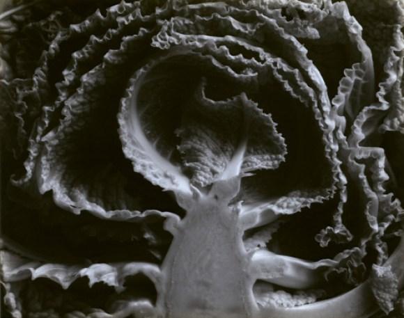 Kale Halved- Edward Weston