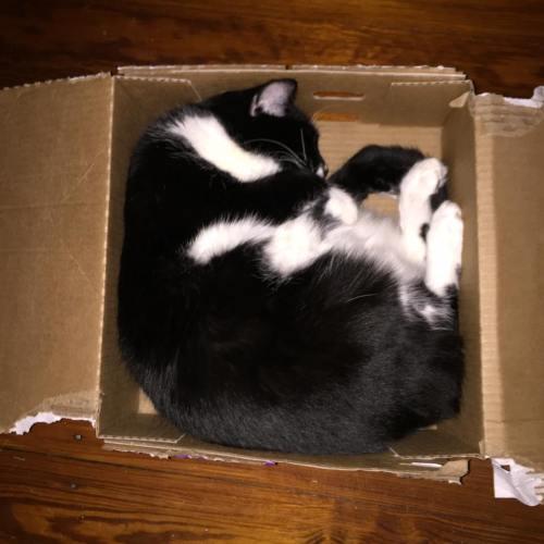 Della box sleeper
