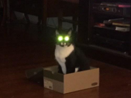 devil eyed shoe box della.