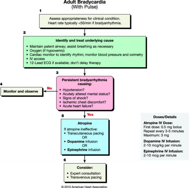 Adult Bradycardia Algorithm