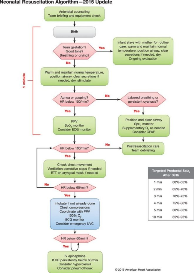 AHA 2015 neonatal resuscitation algorithm