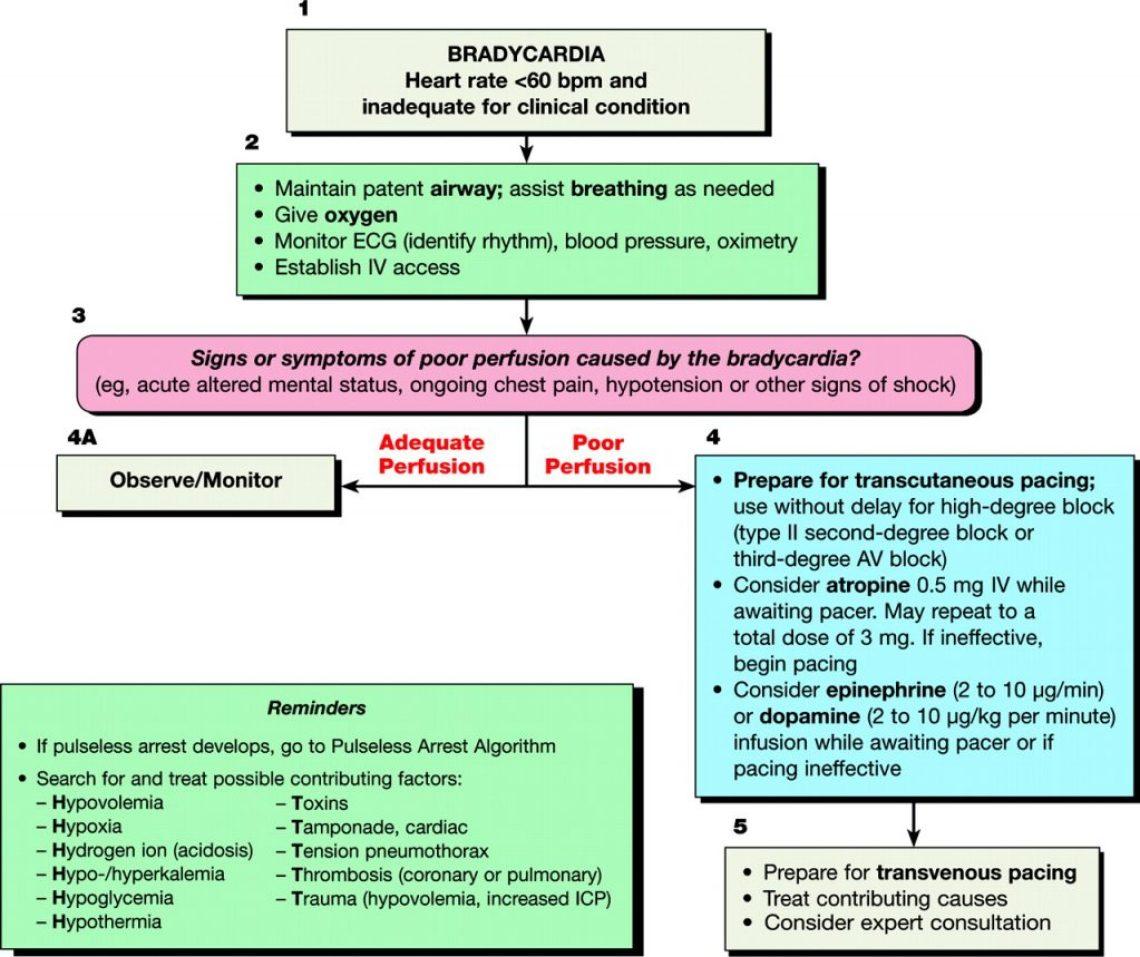 AHA bradycardia algorithm.jpg