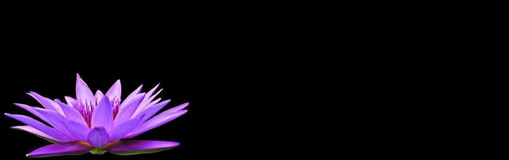 water-lily-1592793_1920.png