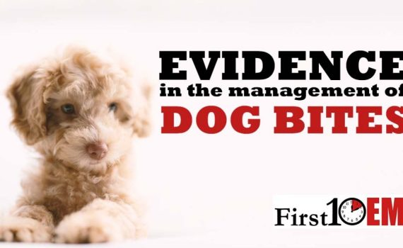 Dog Bite Evidence