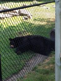 Let sleeping bears lie.